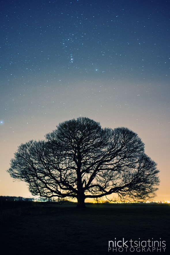 Star field photograph of the Peckleton Tree