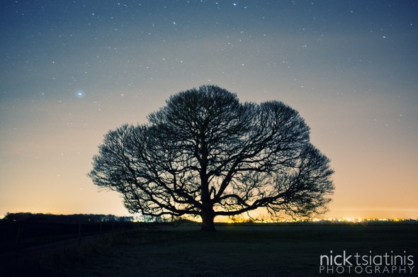 Peckleton Tree Starfield - Landscape Orientation
